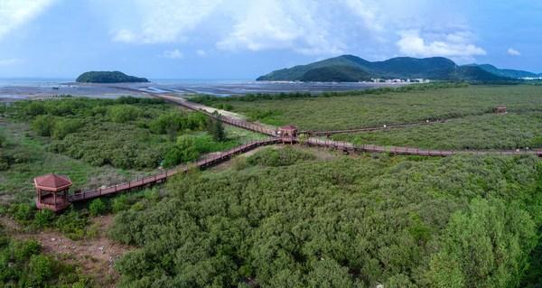 广东省阳江市海陵岛红树林国家湿地公园