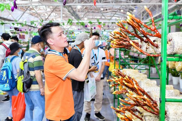 """图4:中国食用菌行业""""规模以上""""生产商、销售商、科技人员70%以上来自福建"""